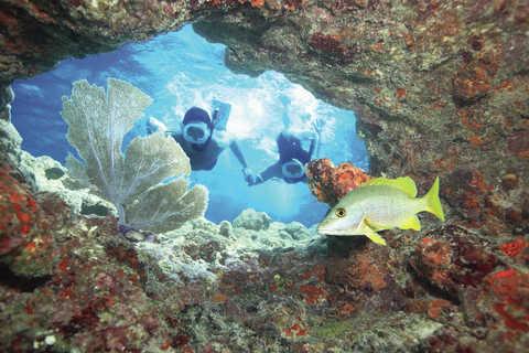 Key West : 3 h de snorkeling