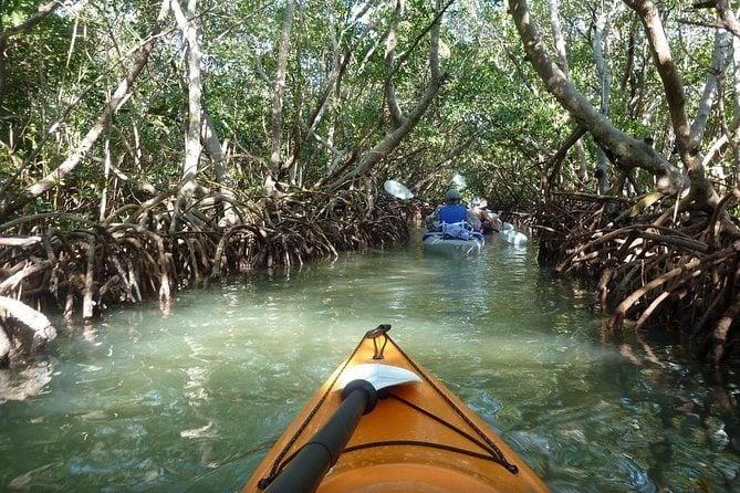 Key West : croisière aux dauphins